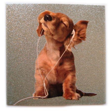 Открытка Собака в наушниках - пусть радость подарит тебе ДР